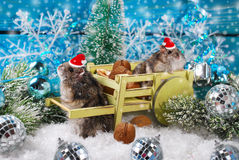 在等待圣诞节的圣诞老人帽子的两只仓鼠 库存图片