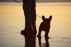 在等待由他的person& x27的海滩的法国牛头犬; s脚 免版税库存图片