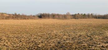 在等待的一块麦地 库存图片
