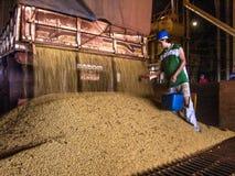 在筒仓的大豆转储 免版税库存图片