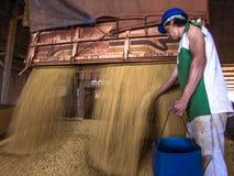 在筒仓的大豆转储 图库摄影