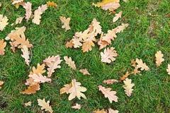 在简单的黄色叶子秋天草绿色11月coold秀丽 库存图片