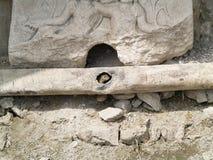 在管子的一只小灰鼠 图库摄影