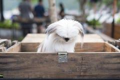 在箱子的一条狗 库存图片