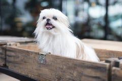 在箱子的一条狗 免版税库存图片