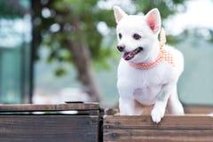 在箱子的一条狗 免版税库存照片