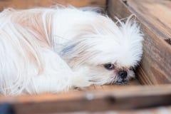 在箱子的一条狗 免版税图库摄影