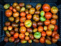 在箱子的不同的蕃茄 库存照片