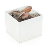 在箱子的兔子 免版税库存图片