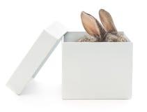 在箱子的兔子 免版税库存照片