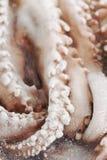 在箱子的冷冻章鱼 免版税库存照片