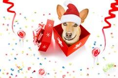 在箱子的圣诞快乐狗 免版税库存照片