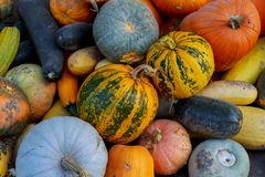 在箱子的多彩多姿的不同的菜,感恩收获:南瓜,金瓜, 免版税库存图片