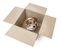 在箱子的小狗 库存照片