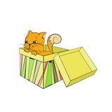 在箱子的小猫 图库摄影