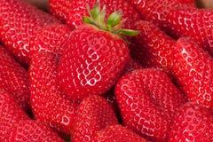 在箱子的新鲜的成熟草莓 库存照片