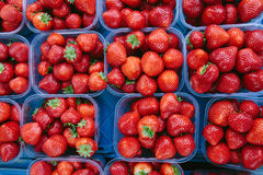 在箱子的新鲜的草莓在市场上在阿姆斯特丹 库存照片