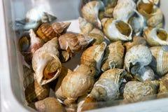 在箱子的未加工的峨螺在海鲜市场上 新鲜的蜗牛 免版税库存照片