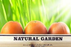 在箱子的桔子在自然绿色背景 免版税库存图片