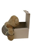 在箱子的熊 免版税库存图片