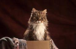 在箱子的猫 图库摄影