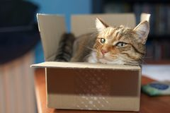 在箱子的猫 免版税库存图片