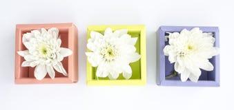 在箱子的白色菊花 免版税库存照片