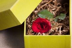 在箱子的红色玫瑰 免版税库存图片