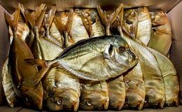 在箱子的翻车鱼 免版税库存图片