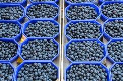 在箱子的蓝莓 免版税库存照片