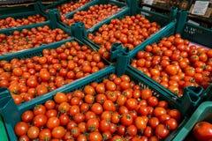 在箱子的蕃茄 免版税库存照片