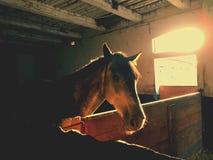 在箱子的马在乡下 库存照片