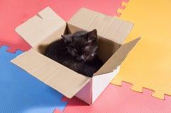 在箱子的黑小猫 免版税库存照片