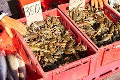 在箱子的活小龙虾在地方fermers市场上 图库摄影