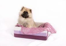 在箱子的滑稽的小狗 免版税库存照片