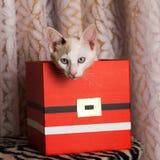 在箱子里面的猫- schrodinger猫 免版税库存图片
