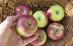 在篮子和手的苹果 免版税库存图片