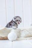 在篮子猫叫声的小猫,哭泣为母亲 库存照片