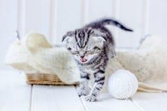 在篮子猫叫声的小猫,哭泣为母亲 库存图片