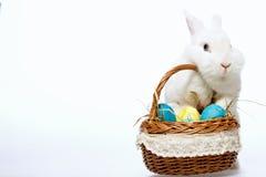 在篮子的一点复活节兔子 库存图片