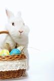在篮子的一点复活节兔子 库存照片