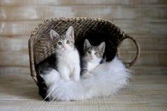在篮子的两只可采纳的小猫 免版税库存图片