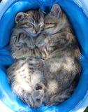 在篮子的两只小猫Sleping 库存照片