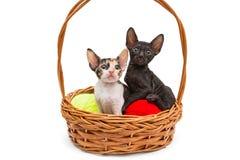 在篮子的两只小的小猫 免版税库存照片