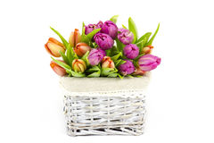 在篮子的五颜六色的郁金香 图库摄影