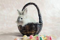 在篮子的兔子用复活节彩蛋 免版税库存图片