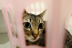 在篮子的可爱的猫 可爱的逗人喜爱的小猫在家 库存照片