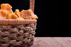 在篮子的可食的野生蘑菇黄蘑菇 图库摄影