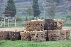 在篮子的土豆 免版税库存图片