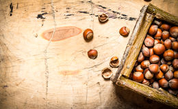 在篮子的坚果 免版税库存照片